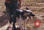 Image of sentry dogs South Vietnam, 1967, second 21 stock footage video 65675062006