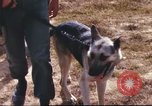 Image of sentry dogs South Vietnam, 1967, second 22 stock footage video 65675062006
