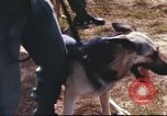 Image of sentry dogs South Vietnam, 1967, second 26 stock footage video 65675062006