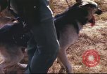 Image of sentry dogs South Vietnam, 1967, second 27 stock footage video 65675062006