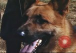 Image of sentry dogs South Vietnam, 1967, second 30 stock footage video 65675062006