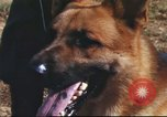 Image of sentry dogs South Vietnam, 1967, second 32 stock footage video 65675062006