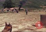 Image of sentry dogs South Vietnam, 1967, second 34 stock footage video 65675062006
