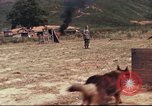 Image of sentry dogs South Vietnam, 1967, second 35 stock footage video 65675062006