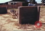 Image of sentry dogs South Vietnam, 1967, second 37 stock footage video 65675062006