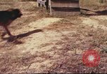 Image of sentry dogs South Vietnam, 1967, second 39 stock footage video 65675062006