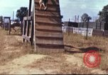 Image of sentry dogs South Vietnam, 1967, second 40 stock footage video 65675062006