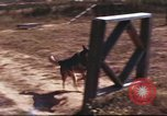 Image of sentry dogs South Vietnam, 1967, second 43 stock footage video 65675062006