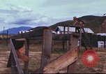 Image of sentry dogs South Vietnam, 1967, second 48 stock footage video 65675062006