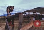 Image of sentry dogs South Vietnam, 1967, second 53 stock footage video 65675062006