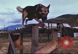 Image of sentry dogs South Vietnam, 1967, second 54 stock footage video 65675062006