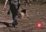 Image of sentry dogs South Vietnam, 1967, second 59 stock footage video 65675062006