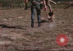 Image of sentry dogs South Vietnam, 1967, second 60 stock footage video 65675062006
