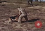 Image of sentry dogs South Vietnam, 1967, second 62 stock footage video 65675062006