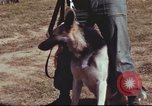 Image of sentry dogs South Vietnam, 1967, second 9 stock footage video 65675062007