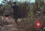 Image of sentry dogs South Vietnam, 1967, second 31 stock footage video 65675062007