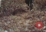 Image of sentry dogs South Vietnam, 1967, second 35 stock footage video 65675062007