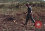 Image of sentry dogs South Vietnam, 1967, second 38 stock footage video 65675062007