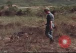 Image of sentry dogs South Vietnam, 1967, second 39 stock footage video 65675062007