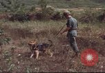 Image of sentry dogs South Vietnam, 1967, second 40 stock footage video 65675062007