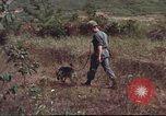 Image of sentry dogs South Vietnam, 1967, second 41 stock footage video 65675062007