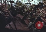 Image of sentry dogs South Vietnam, 1967, second 45 stock footage video 65675062007