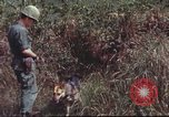 Image of sentry dogs South Vietnam, 1967, second 53 stock footage video 65675062007