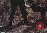 Image of sentry dogs South Vietnam, 1967, second 59 stock footage video 65675062007