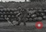 Image of sentry dogs Vietnam, 1965, second 16 stock footage video 65675062013