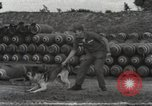 Image of sentry dogs Vietnam, 1965, second 18 stock footage video 65675062013