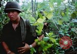 Image of United States soldiers of 4th Infantry Division South Vietnam, 1967, second 39 stock footage video 65675062025