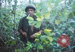 Image of United States soldiers of 4th Infantry Division South Vietnam, 1967, second 50 stock footage video 65675062025