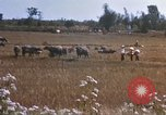 Image of 1st Infantry Division Lai Khe South Vietnam, 1968, second 39 stock footage video 65675062035
