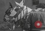 Image of Spanish villagers engaged in normal pursuits Spain, 1937, second 39 stock footage video 65675062078
