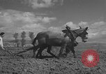 Image of Farmers plowing fields with wooden plows and horses Spain, 1937, second 16 stock footage video 65675062079