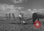Image of Farmers plowing fields with wooden plows and horses Spain, 1937, second 18 stock footage video 65675062079