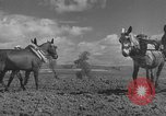 Image of Farmers plowing fields with wooden plows and horses Spain, 1937, second 22 stock footage video 65675062079