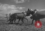 Image of Farmers plowing fields with wooden plows and horses Spain, 1937, second 24 stock footage video 65675062079