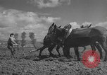 Image of Farmers plowing fields with wooden plows and horses Spain, 1937, second 25 stock footage video 65675062079