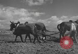 Image of Farmers plowing fields with wooden plows and horses Spain, 1937, second 27 stock footage video 65675062079