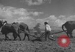 Image of Farmers plowing fields with wooden plows and horses Spain, 1937, second 28 stock footage video 65675062079