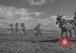 Image of Farmers plowing fields with wooden plows and horses Spain, 1937, second 32 stock footage video 65675062079