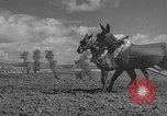 Image of Farmers plowing fields with wooden plows and horses Spain, 1937, second 33 stock footage video 65675062079