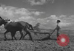 Image of Farmers plowing fields with wooden plows and horses Spain, 1937, second 35 stock footage video 65675062079