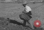 Image of Farmers plowing fields with wooden plows and horses Spain, 1937, second 40 stock footage video 65675062079