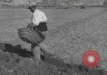 Image of Farmers plowing fields with wooden plows and horses Spain, 1937, second 41 stock footage video 65675062079