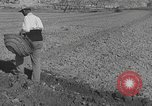 Image of Farmers plowing fields with wooden plows and horses Spain, 1937, second 42 stock footage video 65675062079