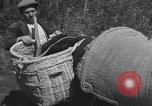 Image of Farmers plowing fields with wooden plows and horses Spain, 1937, second 52 stock footage video 65675062079