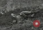 Image of US troops bivouaced on Guam Guam Mariana Islands, 1944, second 51 stock footage video 65675062234