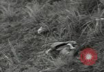 Image of US troops bivouaced on Guam Guam Mariana Islands, 1944, second 59 stock footage video 65675062234